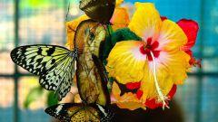 Где находится ботанический парк с садом бабочек