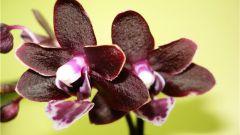 Какая ваза подходит для мини орхидей