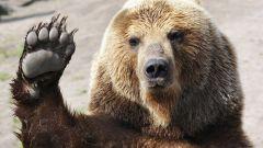 Зачем делить шкуру убитого медведя
