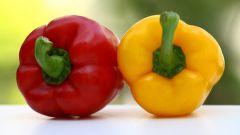 Как подготовить семена сладкого перца к посеву