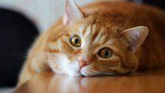 Как понять, что кот просит кошку