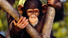 Какое млекопитающее живет дольше всех