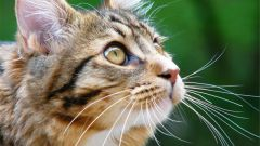 Почему люди отдают кошек