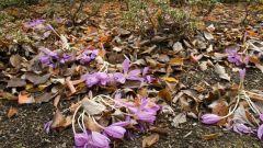 Значение листопада в жизни растений