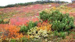 Какие растения растут в тундре