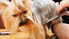 Какие профессии связаны с работой с животными