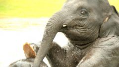 Что любят слоны