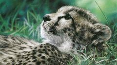 Картины известных художников с изображениями животных