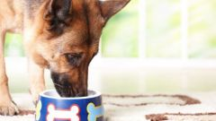 Can you feed dogs cat food