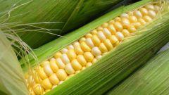 Почему кукурузу называют