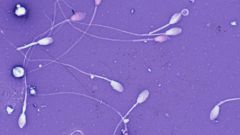How sperm is formed