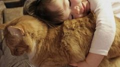 Любят ли кошки обниматься
