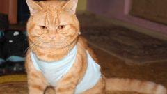 How to sew a bandage for cats