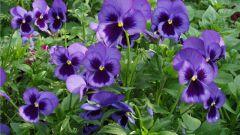Как и какие цветы сажать в феврале