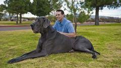 Самая маленькая и самая большая породы собак в мире