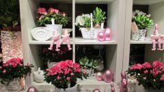 Какой комнатный цветок подарить маме