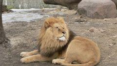 Сокращается ли жизнь животных в зоопарках