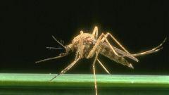 Народные рецепты против комаров