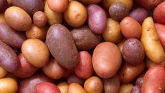 Какой картофель полезнее