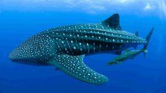 Самое большое хладнокровное животное на земле