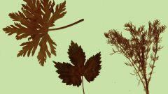 Какие поделки сделать из сухих листьев и цветов