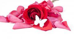 Что сделать из лепестков роз