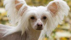 Гипоаллергенные породы собак и кошек