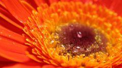 Как действует на человека оранжевый цвет