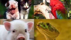 Какие домашние животные самые популярные