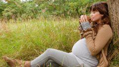 Можно ли пить ромашку при беременности