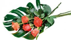 Монстера делициоза: цветок с магическими свойствами