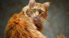 Как избавить кота от сильного стресса