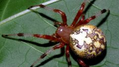What insects are different from arachnids