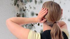 Как избавиться от грибка и плесени в подвале