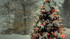 Как выбрать сосну к Новому году