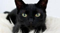What happens if a black cat crosses my path