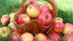 Можно ли поправляться от яблок