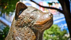 Где установлен памятник Хатико, верному и преданному псу