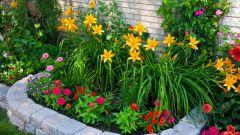 Как составить план посадки цветов