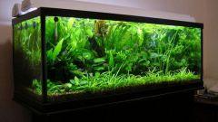 Как заполнить аквариум водой