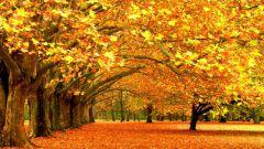 Какие есть пословицы про осень