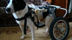 Как выбрать ходунки для собак