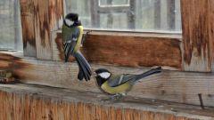 What bird knocking its beak into the window