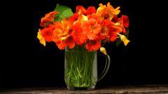 Как сохранить цветы свежими