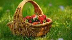 Как просто вырастить клубнику из семян