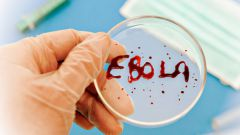 Как избежать заражения вирусом Эбола