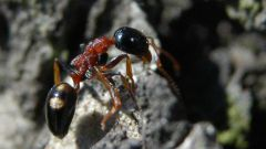 Как избавиться от муравьев: несколько способов