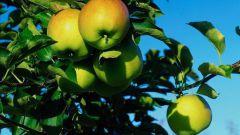 Яблоки и их польза в похудении