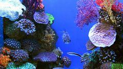 Как выбрать сухой корм для аквариумных рыбок