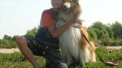 Породы собак для семьи